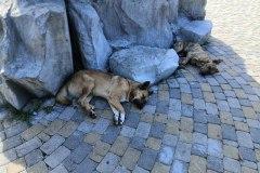 Животные устали и спят в тени Ворот Любви